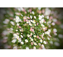 Daisy blur Photographic Print