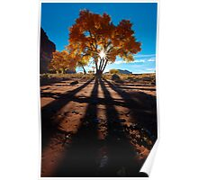 Cottonwood Shadows Poster