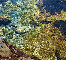 Tidal Pool by Brenda Boisvert