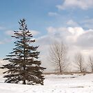 Lone Evergreen by sundawg7