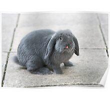 Funny Rabbit Poster