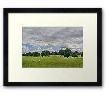 Sheep Grazing the Meadow Framed Print