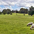 Peaceful Pastures by Colin Metcalf