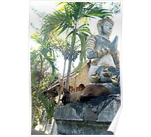 Siamese Cat Sleeps with Buddha Poster