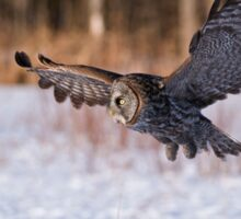 Great Grey Owl - Dunrobin Ontario Sticker