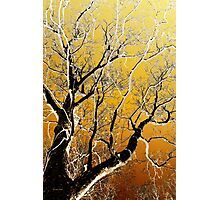 Gold Abstract Tree Art Photographic Print