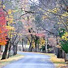 Way Down Beyer's Avenue - Hill End NSW Australia by Bev Woodman