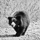A Bear Walk by Neha  Gupta