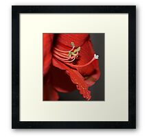 Enticing Pollination in Red Framed Print
