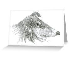 Rough Collie Lassie Profile Sketch Greeting Card