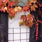 Rustic Autumn Vines Against An Old Building 2 by Jamie Wogan Edwards