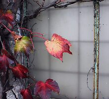 Rustic Autumn Vines Against An Old Building 5 by Jamie Wogan Edwards