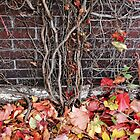 Rustic Autumn Vines Against An Old Building 6 by Jamie Wogan Edwards