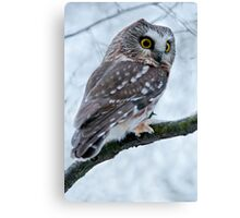 Northern Saw Whet Owl Branch Canvas Print