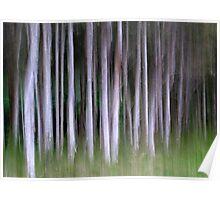 Paperbarks Poster