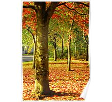 Golden Autumn Trees Poster
