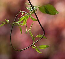 Natural loop by Andrea Rapisarda