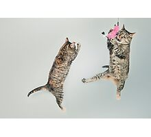 MEOW Playing Cats Photographic Print