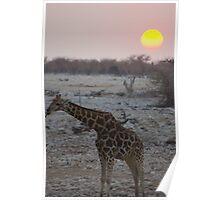 African sunset 3 - Etosha National Park Poster