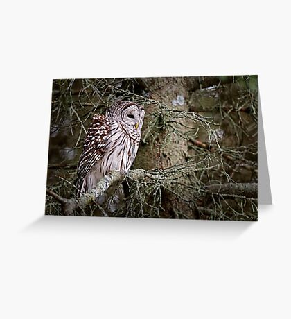 Barred Owl - Brighton, Ontario Greeting Card
