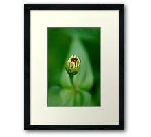 New Born Flower Framed Print