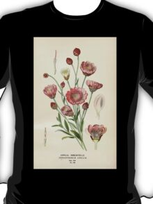 Favourite flowers of garden and greenhouse Edward Step 1896 1897 Volume 3 0016 Annual Immortelle T-Shirt