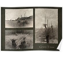 Grass Tree Triptych Poster