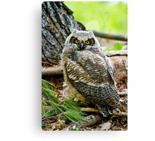 Great Horned Owlet Canvas Print