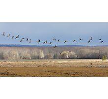 Streaming Cranes Photographic Print