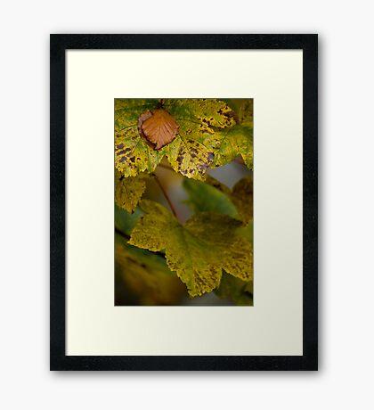 Autumnal Framed Print