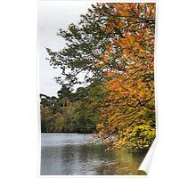 Black Park Lake Poster