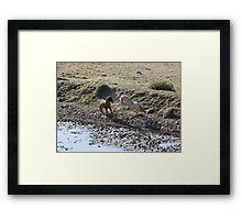Mud Fight Framed Print