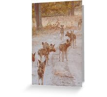 Wild Dogs on the Hunt - Okavango Delta, Botswana Greeting Card