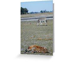 Hyena Resting near Zebra - Okavango Delta, Botswana Greeting Card