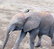 Baby Elephant - Okavango Delta, Botswana by Nina Brandin