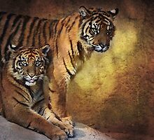 Tiger Cubs by zzsuzsa