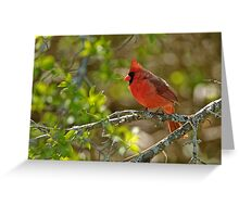 Northern Cardinal - Ottawa, Ontario Greeting Card