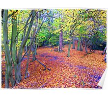 Carpeted Woodland Poster