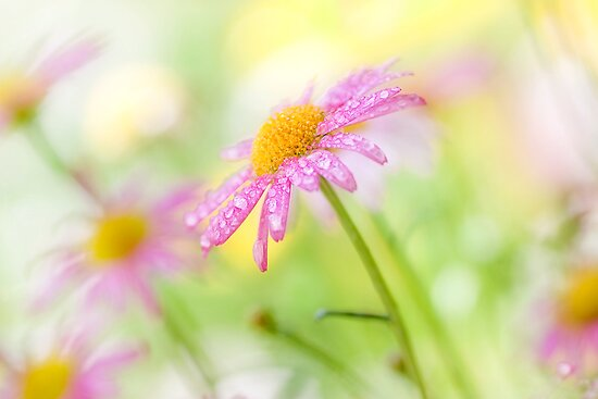 Summer sparkle by Mandy Disher