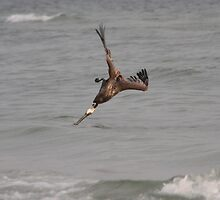 Diving Pelican by Don Rankin