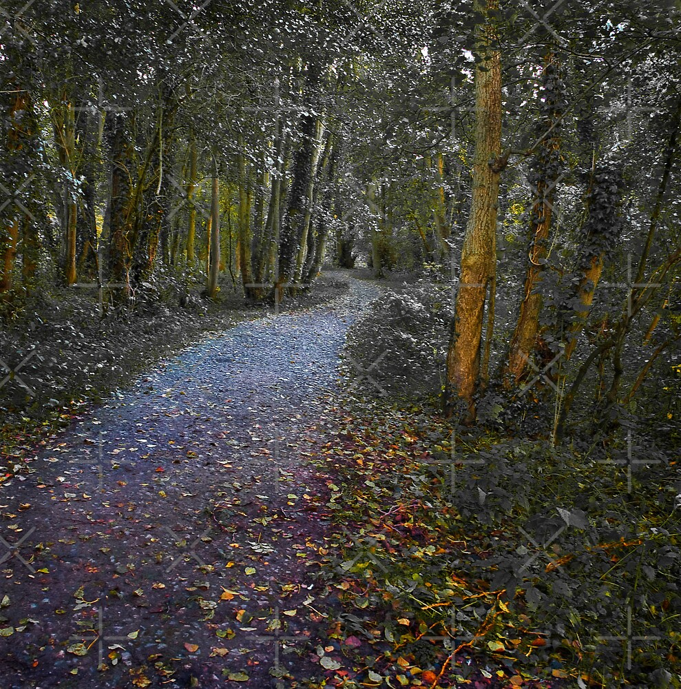Woodland Walk by Geoff Carpenter