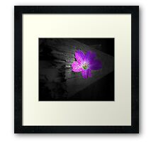 Lonely flower Framed Print