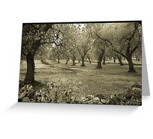 Olive grove and rock wall Greeting Card