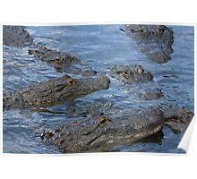 Gators!!! Poster