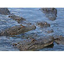 Gators!!! Photographic Print