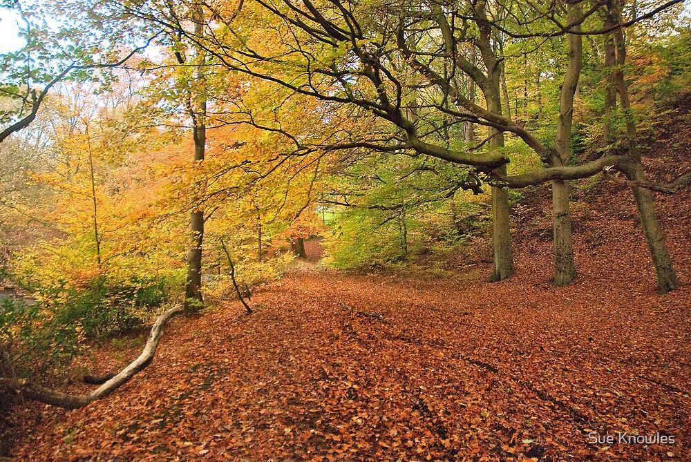 Autumn Walk by Sue Knowles