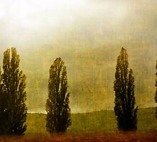 Standing in Fog by Gayle Dolinger