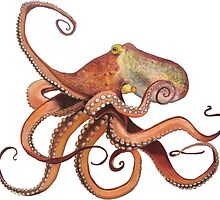 Octopus by jhuxster