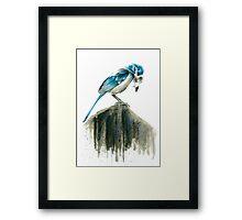 Bird Evolution Framed Print