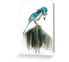Bird Evolution Greeting Card